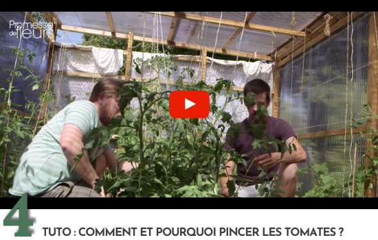 Tuto : Comment et pourquoi pincer les tomates ?